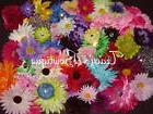 25 Flowers on Alligator Hair Clips for Interchangeable Hats